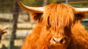 Vaca Highlands